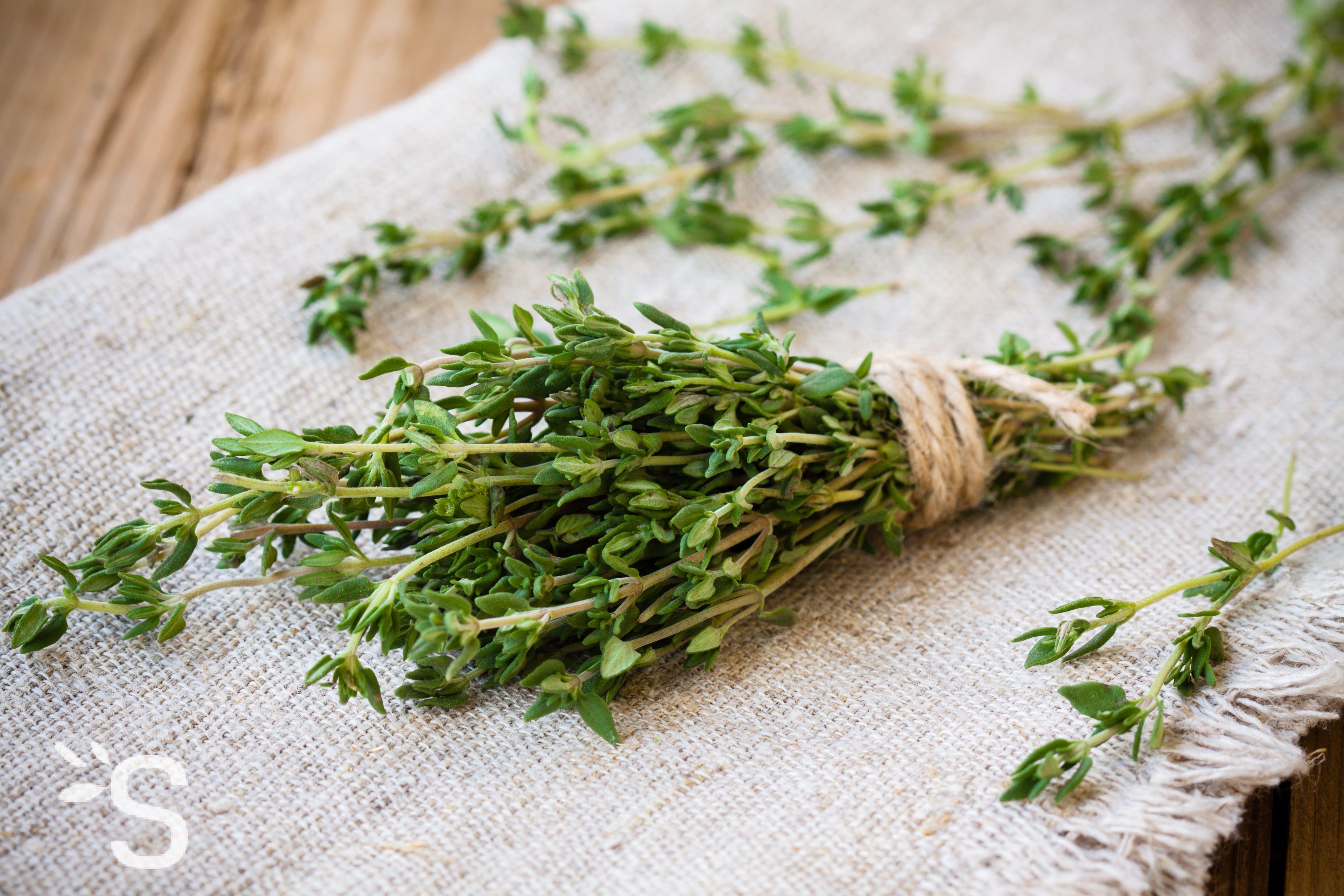 Différentes Variétés De Thym thym - plantes et actifs naturels | santéonaturel