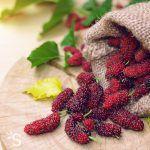 Mulberry ou mûrier blanc