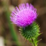 Cure / Recette - Éviter les ballonnements - plantes & enzymes