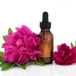 Rose de damas ou centifolia