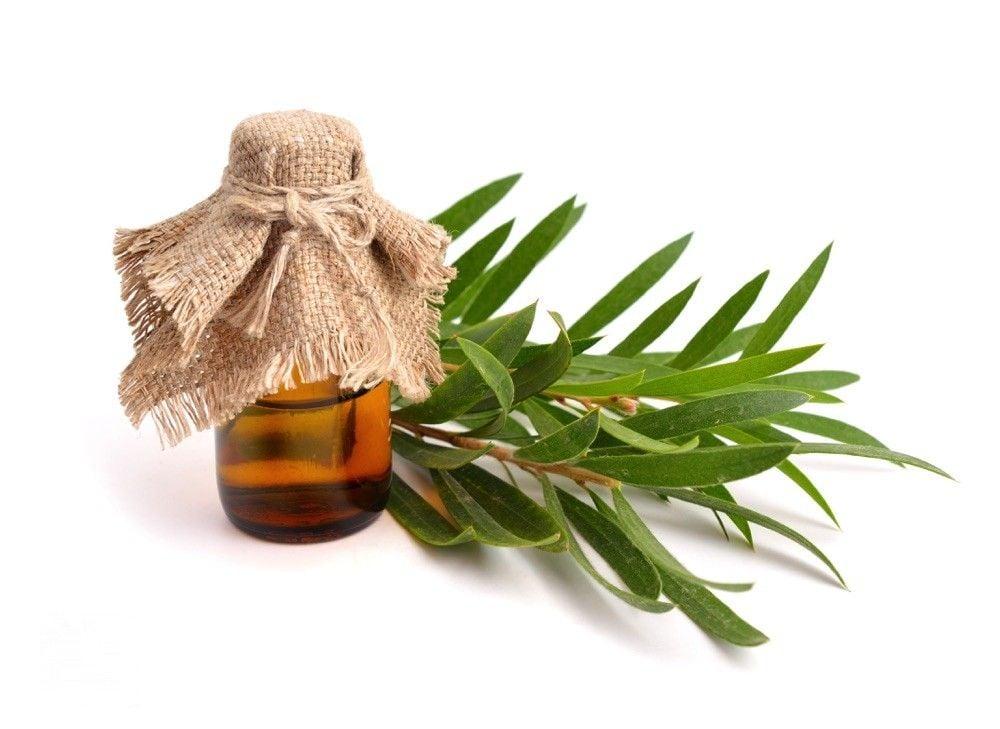 """Résultat de recherche d'images pour """"huile essentielle tea tree"""""""
